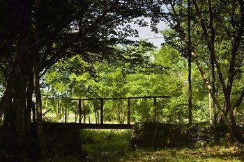 Wooden Foorbridge